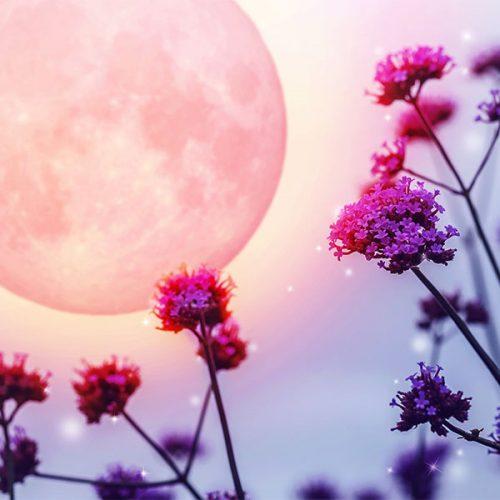 Gossamer Moon Perfume OIl